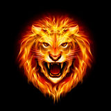 Head of fire lion. Head of aggressive fire lion  on black background Royalty Free Stock Image