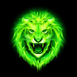 Head of fire lion. Head of aggressive green fire lion  on black background Royalty Free Stock Images