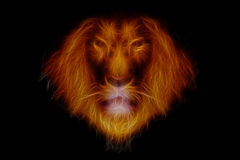 Head of  fire lion. On black background Stock Photos