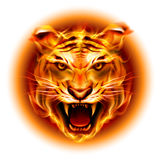 Head of fire tiger. Head of agressive fire tiger  on white background Royalty Free Stock Images