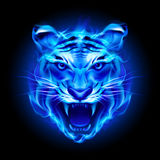 Head of fire tiger. In blue. Illustration on black  background Royalty Free Stock Photography
