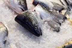 Head of fish Stock Photo