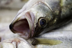 Head of a fish. A fish with its mouth wide open Stock Photo