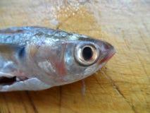 Head of fish stock image