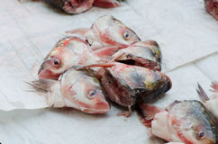 Head of fish Stock Photography