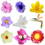 Head flowers Stock Photography