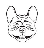 Head of french bulldog Stock Images