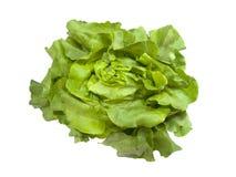 Head of fresh Boston Lettuce Stock Images