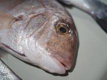 Head of fresh fish. On baking sheet Stock Image