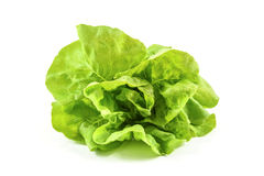 Head of fresh lettuce from organic production Royalty Free Stock Photos