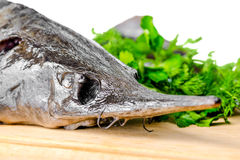 Head of fresh raw sturgeon fish with greens Royalty Free Stock Image