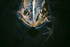 Head of frog Stock Photos