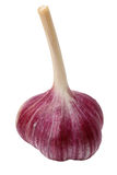 Head of garlic Royalty Free Stock Images