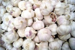 The head of garlic Royalty Free Stock Photography