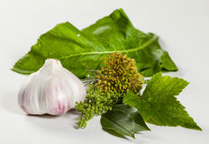 Head of garlic and fresh greens Stock Photography