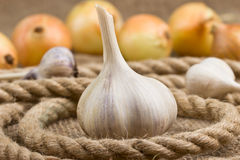 Head of garlic lying on sackcloth Stock Photography