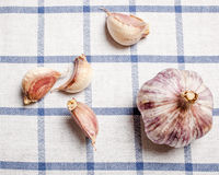 Head of garlic. And scattered near individual slices are on the table on the tablecloth in blue cage royalty free stock photo
