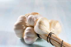 Head of garlic Stock Image