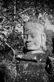 Head of gate guardian, Angkor, Cambodia Stock Images