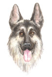 Head of the German shepherd Stock Image