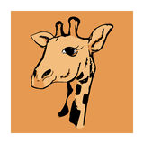 The head of a giraffe 4 Royalty Free Stock Image