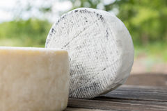 Head of goat cheese Stock Image