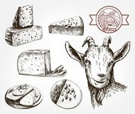 Head of a goat. Goat cheese. Set of sketches on a gray Royalty Free Stock Image