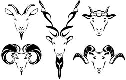 Head of goat and sheet illustration set Royalty Free Stock Photo