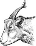 Head of goat Stock Photography