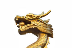 Head gold dragon on background Royalty Free Stock Photos