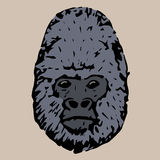 Head gorila Stock Photography