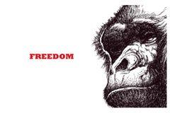 Head gorilla, engraving style illustration Royalty Free Stock Photos