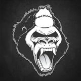 Head of a gorilla. Vector illustration Stock Images