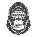 Head of gorilla. Vector illustration, ferocious gorilla head on a white background Royalty Free Stock Photography