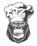 Head of gorilla. Vector illustration, serious gorilla head in chef hat on a white background Royalty Free Stock Images