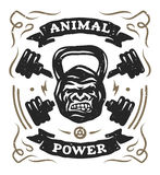 Head gorilla weight. Shirt design. Two barbell and head gorilla weight. Athletic emblem, poster, t shirt design Royalty Free Stock Photo