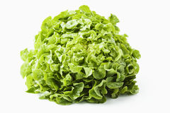head grönsallat Arkivfoto