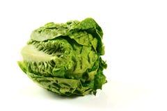 head grönsallat för smör Royaltyfria Foton
