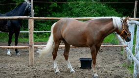Horse in the paddock. Head graceful horse close. Lovely animal gelding and his eyes. Sport horses in harness stock video footage