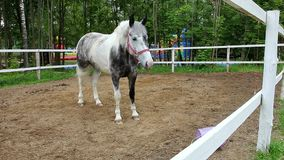 Horse in the paddock. Head graceful horse close. Lovely animal gelding and his eyes. Sport horses in harness stock footage