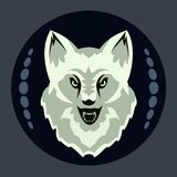 Head of a gray wolf on a black background royalty free stock photo