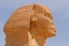 Head of Great Sphinx. Of Giza Stock Images
