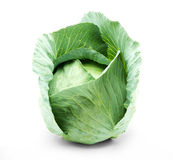 Head of green cabbage Stock Image