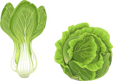 Head of green cabbage and lettuce Stock Images