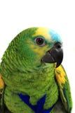 Head of green exotic bird Stock Photos