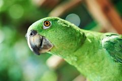 Head of green parrot Royalty Free Stock Images