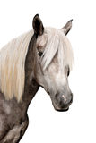 Head of a grey horse. On the white background Royalty Free Stock Images