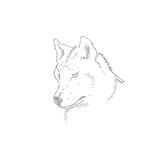 Head of a grey wolf.Vector illustration Stock Photos