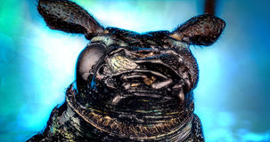 Head of ground beetle Royalty Free Stock Image