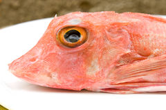 Head Of Gurnard Fish Stock Photo